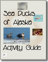 Sea Ducks of Alaska Activity Guide